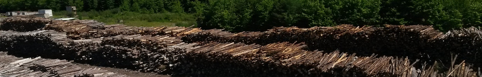Wood piles for biomass - cropped